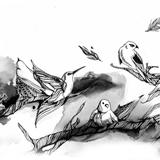aves160